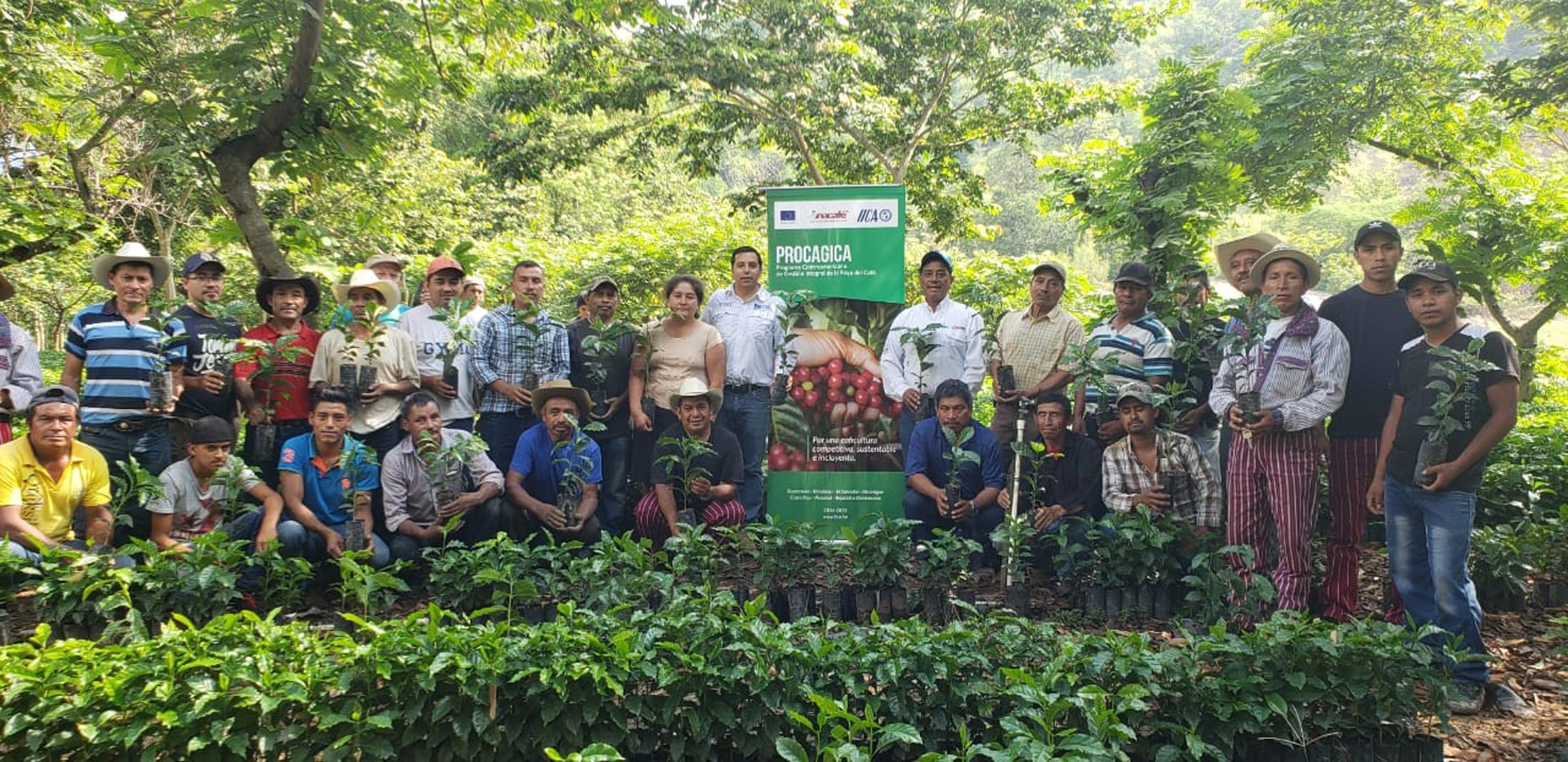 263 productores de café de Huehuetenango reciben 100 mil